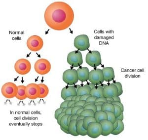 How healthy cells and those riddled with toxins divide and reproduce. Specifically cancer cells