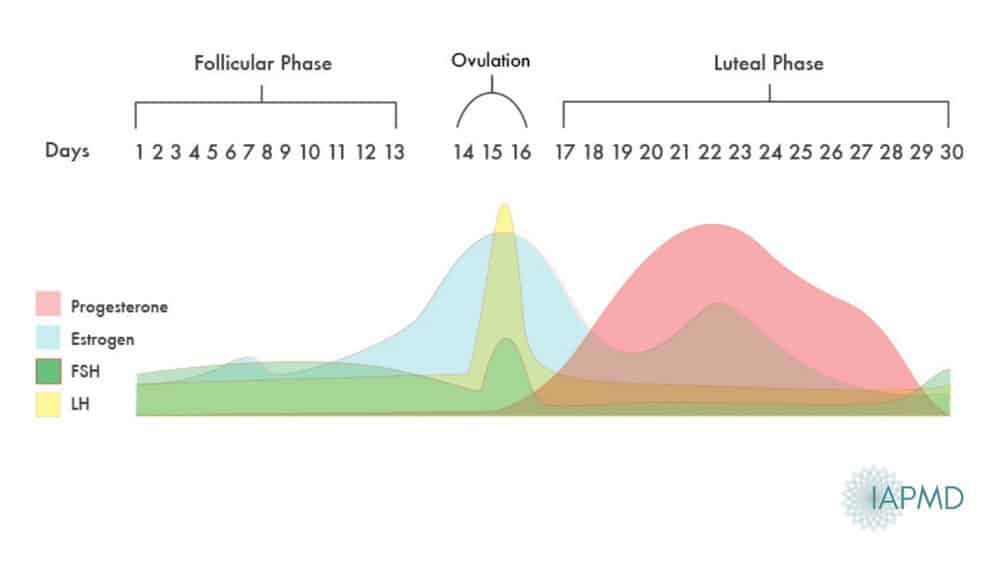 Hormone cycle chart showing ovulation calculator, rise in oestrogen and progesterone