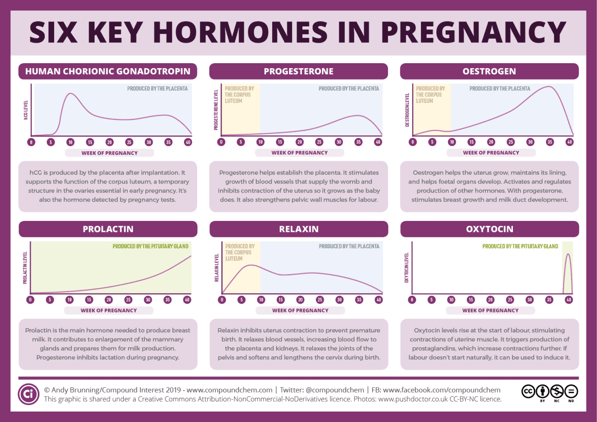 Six hormones that are key to pregnancy and avoiding early miscarraige