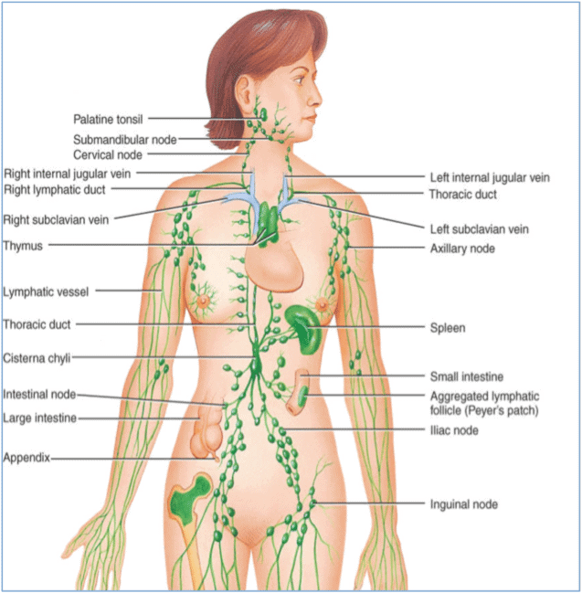 Massage for lymphatic drainage
